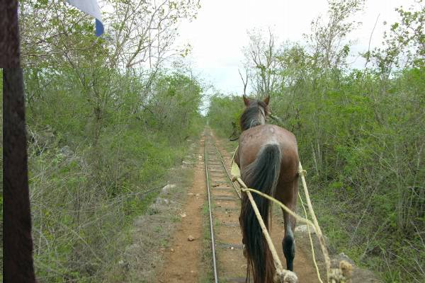 A horse pulling our truck between cenotes